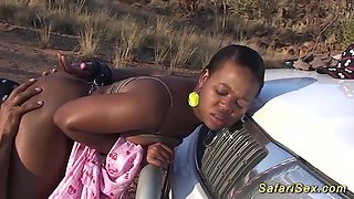 Chubby big breast hot chocolade african babe wild fucked at my sex safari trip