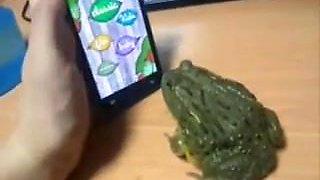 yump frog green